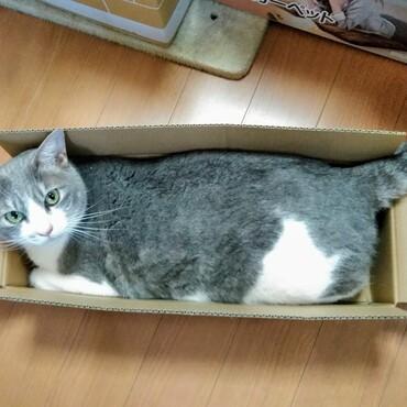 ジャストフィットの箱が好き