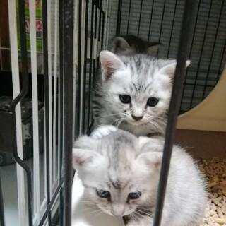 可愛い子猫2ヶ月