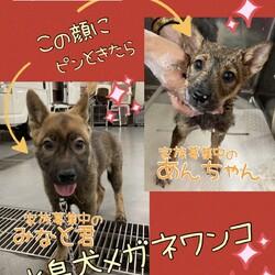 「倉敷の水島犬メガネワンコ達→全頭譲渡決定!」サムネイル1