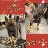 倉敷の水島犬メガネワンコ達