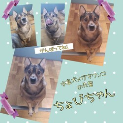 「倉敷の水島犬メガネワンコ達→全頭譲渡決定!」サムネイル3