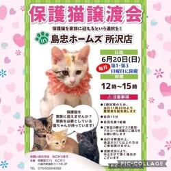 「6月20日(日)島忠ホームズ所沢店譲渡会!」サムネイル1