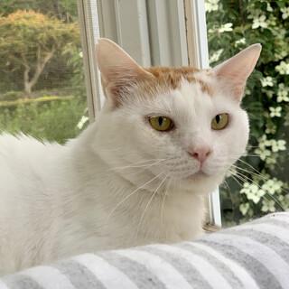 【性格◎】人と猫が大好き!一人暮らしの茶白