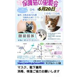 保護猫の里親会 サムネイル1