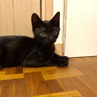 かわいい黒猫兄妹