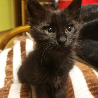ダンボールに入れて捨てられていた黒猫の女の子