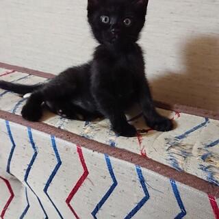黒仔猫げんた君里親さん募集