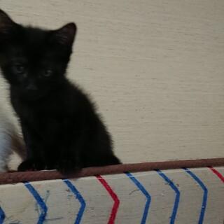 黒仔猫めいちゃん里親さん募集