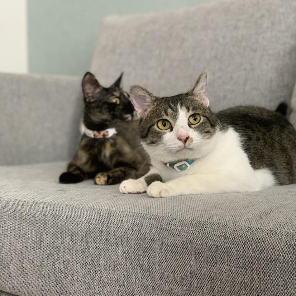 保護猫 咲太郎のカバー写真
