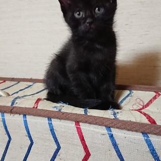 黒仔猫さつきちゃん里親さん募集