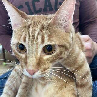 人も猫も大好きな茶トラ男子 11ヶ月