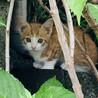 野良ちゃんの子猫(3匹)