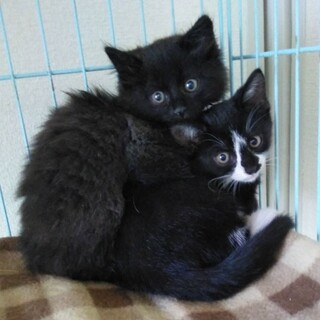 黒と黒白姉妹