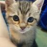 外猫が動物病院で出産した3匹の仔猫の里親さん募集中