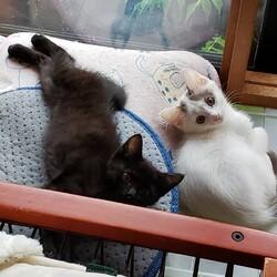 「子猫が次々と…」サムネイル1