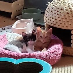 「子猫が次々と…」サムネイル3