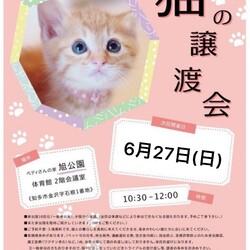 知多☆常滑☆阿久比☆合同、猫の譲渡会(=^x^=)
