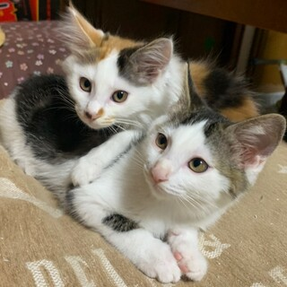 可愛い兄妹♪キム&チョン
