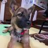 推定4ヶ月・雑種犬の女の子アミさん サムネイル4