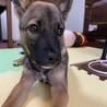 推定4ヶ月・雑種犬の女の子アミさん サムネイル5