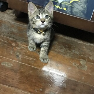 生後1ヶ月半の子猫です。