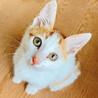 【島根県出雲市】子猫の飼い主さん募集