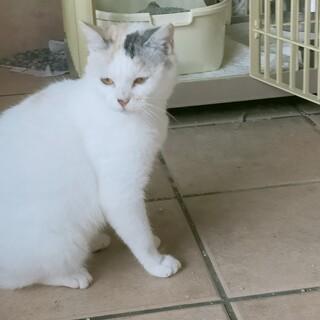 公園で保護したパステル三毛の可愛い猫!