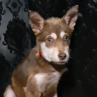 生後3か月ぐらいの野犬の女の子・セーラちゃん