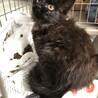 美形ママから産まれた長毛の黒猫女の子