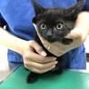 美形ママから生まれた大人しく可愛い黒猫君