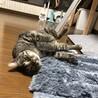 保護猫くーちゃん! サムネイル6