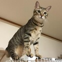 猫の飼育経験豊富な方探しています