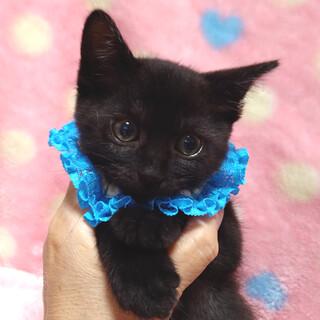 なれなれ黒猫♪ペガくん 1ヵ月半すぎ