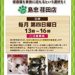 6月27日(日)おーあみ避難所譲渡会in荏田