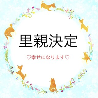 柴犬♀マユカ 推定4~5歳