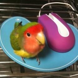 旅行に行く時、鳥さんはどうしていますか?サムネイル