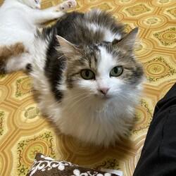 「母娘猫がそれぞれ別の家族の元へ」サムネイル1