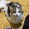 母娘猫がそれぞれ別の家族の元へ