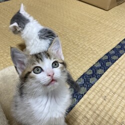 子猫3匹が正式譲渡に❗️