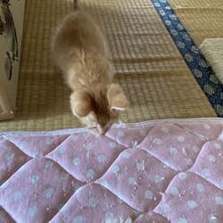 「子猫の急死」サムネイル2