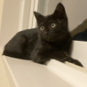 かわいらしい黒猫ちゃん♀