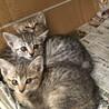 保護猫4姉妹