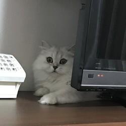 「猫の目のように」サムネイル2