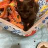 お目目クリクリ黒の仔猫です