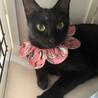 エキゾチックで美人な黒猫さん