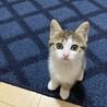 仲良し子猫の兄妹♡♂♀