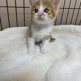 美猫5兄妹❗️俺を選ばなきゃ損損❤️デレ猫ビスケ