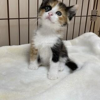美猫5兄妹❗️三毛猫は気まぐれ❤️クールなシナモン