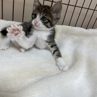 美猫5兄妹❗️真打登場❤️犬寄りの猫バンブー
