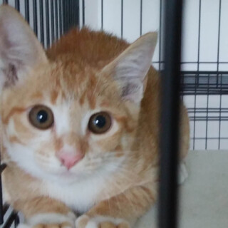 生後3ヶ月くらいの子猫 6月23日保護